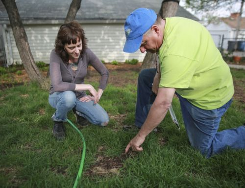 Is your lawn in need of fall repairs?