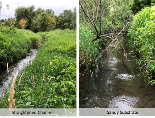 Restoring a Trout Stream