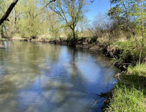 Stream Bank Restoration in Empire